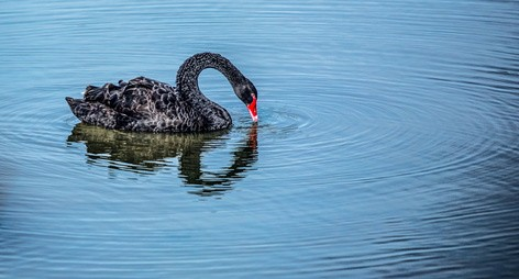 Y2K and Black Swans: Investing for the Next Crisis