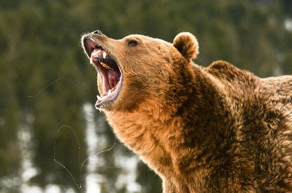The Next Bear Market: How Bad Could It Get?
